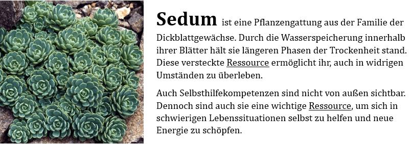SeDum Pflanze Website mit Beschreibung